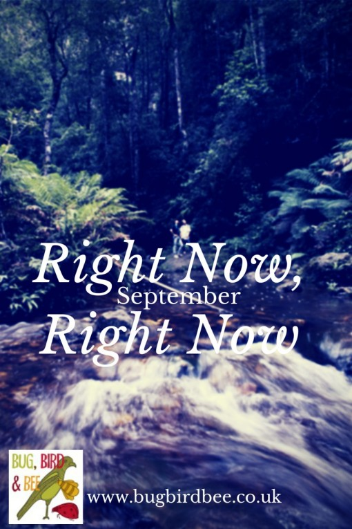 Right Here Right Now September y is a monthly lifestyle update from Aly Hodge of Bug,Bird And Bee