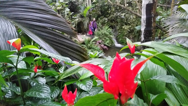 large red tulip like flowers and dark green leaves of a tropical plant