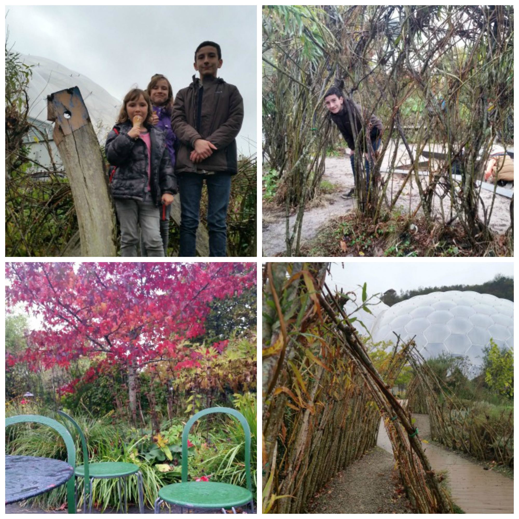 a collage of 4 photos.My 3 children stand outside in the dyers garden.My son crouches through a willow arch.A red Acer contrasts with the green table and two chairs in the foreground.A willow arch and a biome in the background