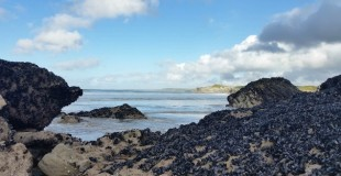 Tolcarne Beach- Newquay, Cornwall