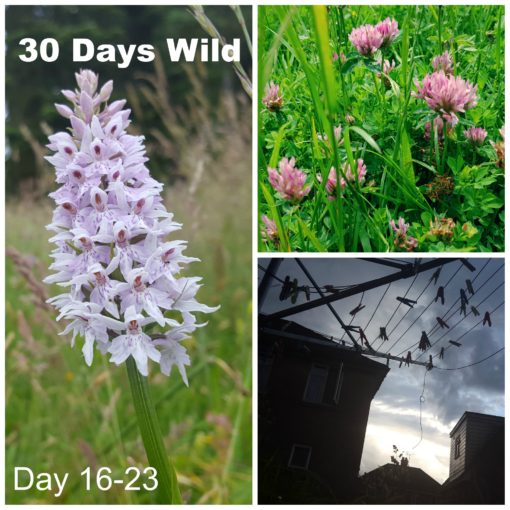 30 Days Wild- Day 16-23: Meadows And Geese